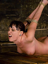 Fetish Pics: Dana DeArmond, is stripped, bound, and forced to obey.